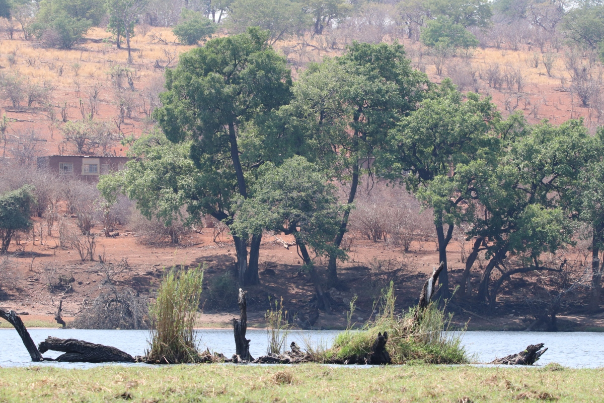 Chobe River Namvia Pangolin Photo Safari Africa